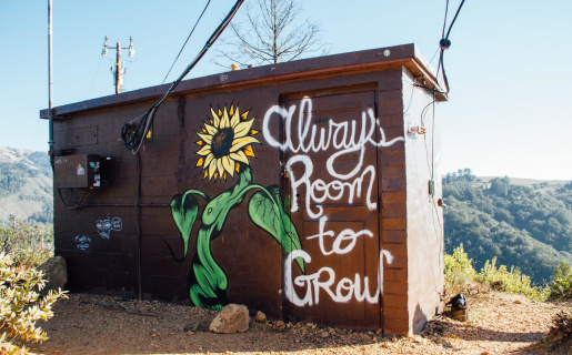 """a building with graffiti of a flower and text that says """"always room to grow"""""""